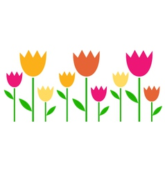 Colorful spring Tulips in row isolated on white vector image