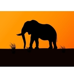 silhouette elephant on background sunset vector image vector image