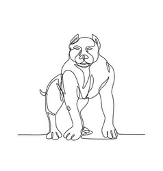 American bully continuous line vector