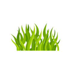 flat of bright green grass vector image