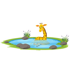 Giraffe playing in the pond vector