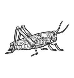 grasshopper locust engraving vector image