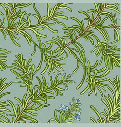 Rosemary pattern vector