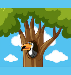Toucan bird in hallow tree vector