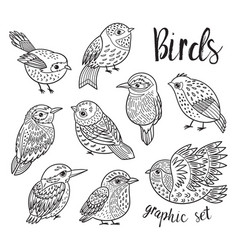 graphic set with hand drawn exotic birds line art vector image