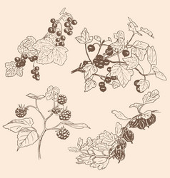 set of berries red currant black currunt vector image