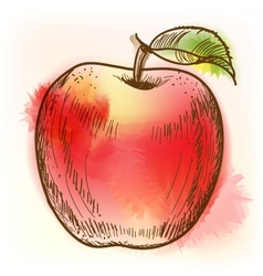 Red apple watercolor painting vector image