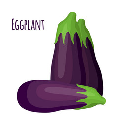 purple eggplant in cartoon flat style natural vector image