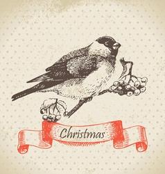 Christmas bullfinch and ashberry vector