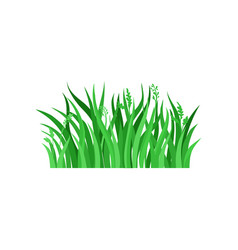 Green spring grass with spikelets natural vector