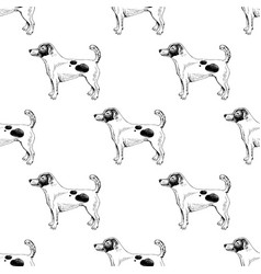 seamless pattern with hand drawn jack russel vector image