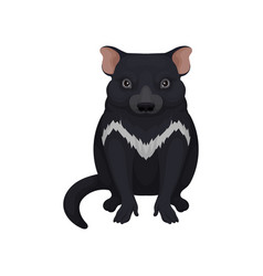 tasmanian devil australian animal with black fur vector image