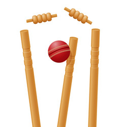 Ball cricket in wicket vector