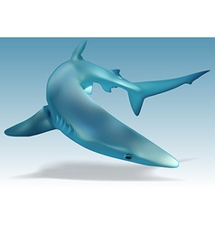 Blue Shark vector