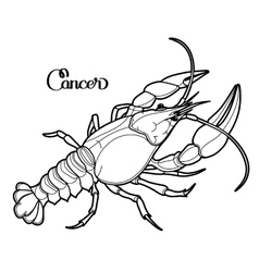 Graphic cancer vector