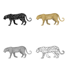 leopardafrican safari single icon in cartoon vector image