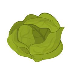 Lettuce vegetable food symbol vector