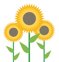 Sunflowers isolated on white background vector