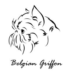 Belgian Griffon vector image