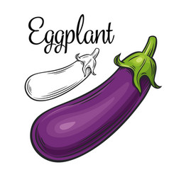 Eggplant drawing icon vector