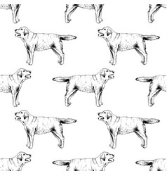 seamless pattern with hand drawn labrador vector image