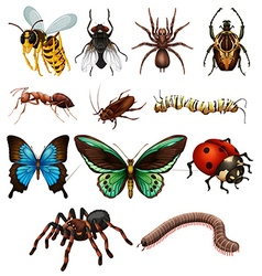 Set of different wild insects vector image