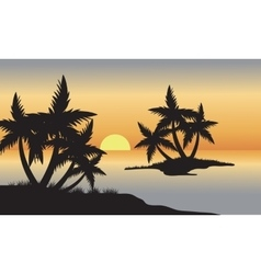 Palm in beach at sunset vector