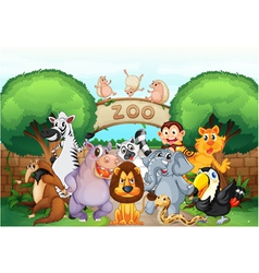 zoo and animals vector image vector image