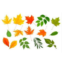 colorful leaves collection vector image vector image