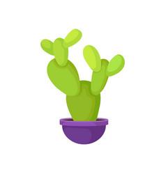 bright green cactus in purple ceramic pot nature vector image