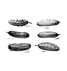 cuke sketch set vector image