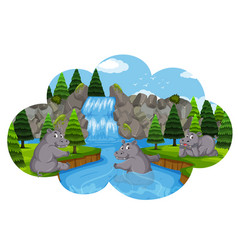 Hippos playing in waterfall vector