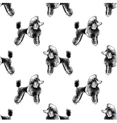 seamless pattern with hand drawn poodles vector image
