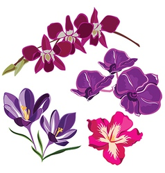 Set of realistic flowers isolated on black vector image