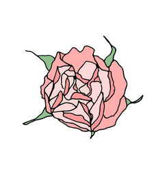 pink rose top view isolated on white background vector image vector image