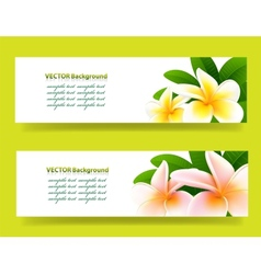 Bannner with frangipani floral background vector