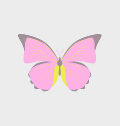 Colorful icon of butterfly isolated on white vector