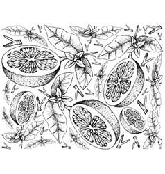 Hand drawn of grapefruit fruit on white background vector