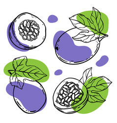 Passion fruit tropical delicacy sketch vector