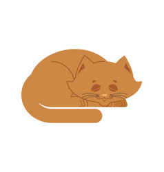 sleeping cat brown isolated kitten be asleep vector image