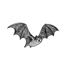 bat engraving style vector image vector image