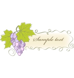 vintage banner with grapes and leaves vector image