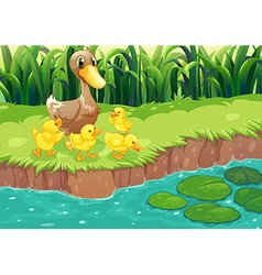 A mother duck with her ducklings at the river vector image vector image