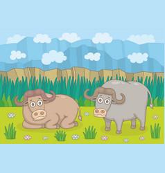 buffalos in nature vector image