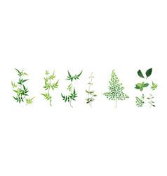 Designer art elements set green forest leaf leaves vector
