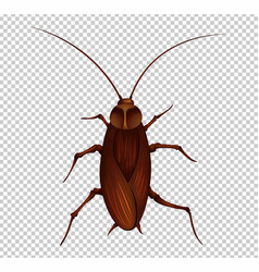 Brown cockroach on transparent background vector