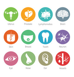 icon set of human internal and external organs in vector image