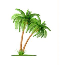 Realistic palm tree with coconuts 3d exotic vector