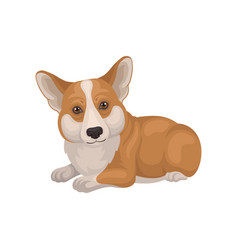 detailed flat portrait of cute welsh corgi vector image