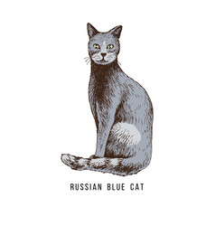 Hand drawn russian blue cat vector